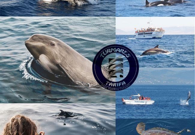 Al Amireh - Ver ballenas en el estrecho