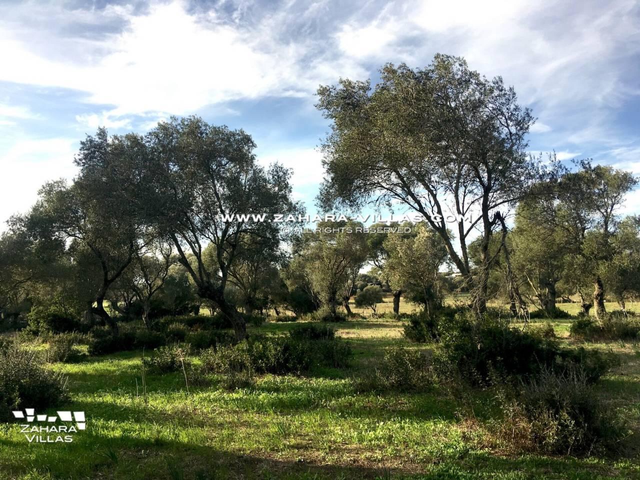 Imagen REF.000044 ubicada en Vejer de la Frontera